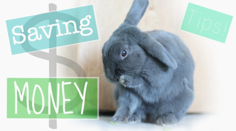 Tips for Saving Money With A Bunny! 1