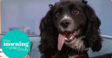 Firefighting Dog Searches the Studio for Fire Hazards | This Morning 4