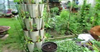 Vegetable Garden Tour & Tips 5/25/18: Lush Tomato Growth, Spraying Schedule, Buy Damaged Flowers 3