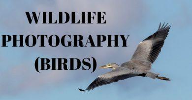 UK Wildlife Photography - an unexpected encounter... (Peregrine falcon, hobby, buzzard and more!!!) 2
