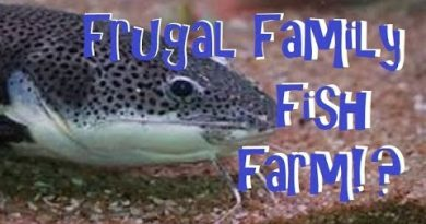 Frugal Family Homestead Front Yard Converted to Fish Pond?!? 2