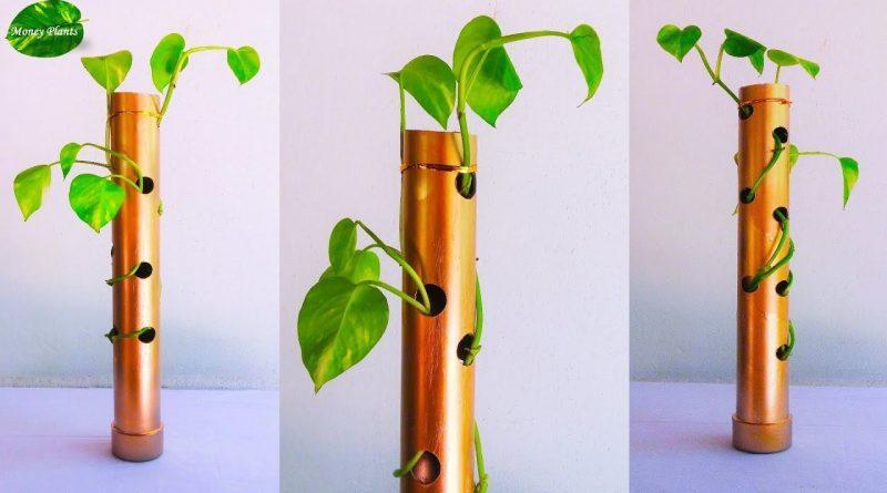 Money plant Growing Ideas-Money plant Tabletop Decoration-Money plant Growing Stick//MONEY PLANTS 1