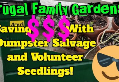 Frugal Family Gardens! #1: Saving MONEY With Dumpster Salvage AND Volunteer Plants!