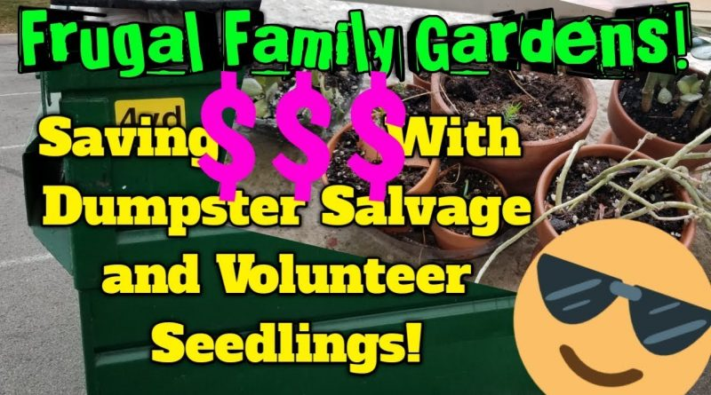 Frugal Family Gardens! #1: Saving MONEY With Dumpster Salvage AND Volunteer Plants! 1