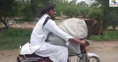 pakistani youngman saving money by taking cow on bike see the sciene funny video 3
