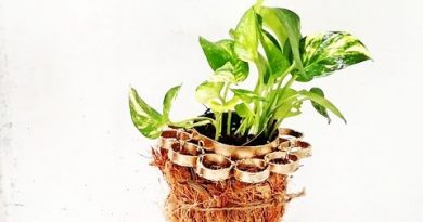 unique hanging planter/ plastic bottle ideas /money plant growing style/ORGANIC GARDEN 2